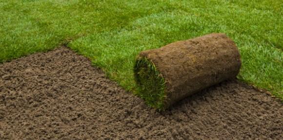 zakladanie trawnika art area